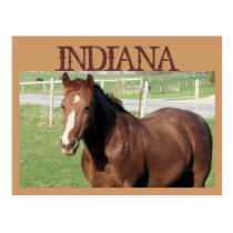 INDIANA Horse Postcard