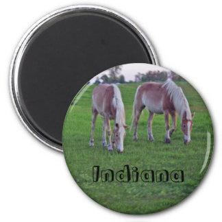 Indiana Horses Fridge Magnet