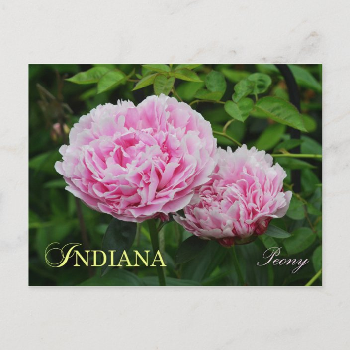 Indiana Peony Enamel Pin State Flower Pin Series Peonies flair pink flower Indiana Hoosier