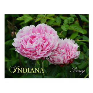 Indiana State Flower: Peony Postcard
