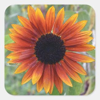 Indiana Sunflower Sticker