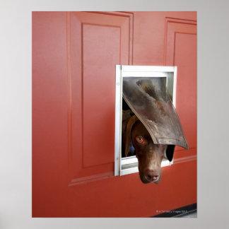 Indicador alemán que mira afuera a través de perr posters