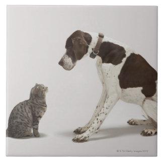 Indicador que mira abajo el gato azulejo cuadrado grande