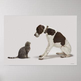 Indicador que mira abajo el gato impresiones