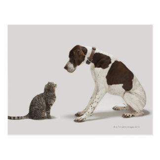 Indicador que mira abajo el gato postal