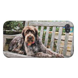 Indicador Wirehaired alemán - Lexy iPhone 4/4S Fundas