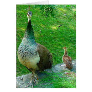 Indignant Mama Peacock with Chick Card