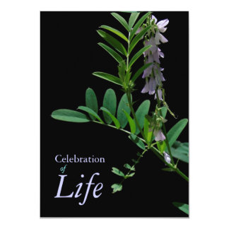 Indigo 1 Celebration of Life Funeral Announcement