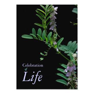 Indigo 2 Celebration of Life Funeral Announcement