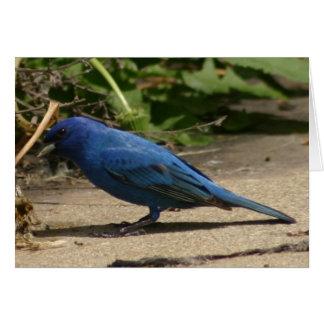 Indigo Bunting Bird Card