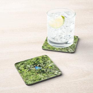 Indigo Bunting Beverage Coasters