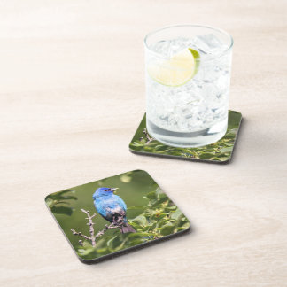 Indigo Bunting Drink Coaster