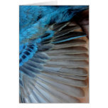 Indigo bunting feathers greeting card