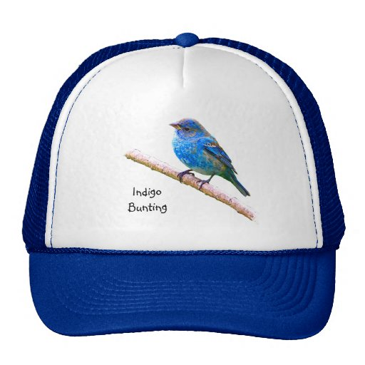 Indigo Bunting Image Hat