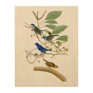Indigo Bunting John James Audubon Birds of America Wood Print