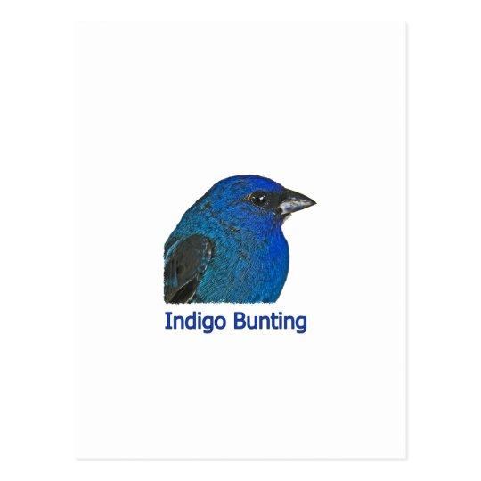 Indigo Bunting Logo Postcard