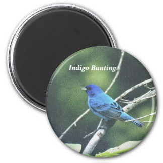 Indigo Bunting Magnet