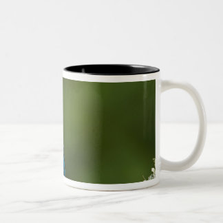 Indigo Bunting, Passerina cyanea, Coastal Two-Tone Coffee Mug