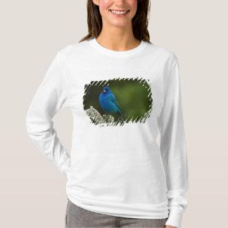 Indigo Bunting, Passerina cyanea, Coastal T-Shirt