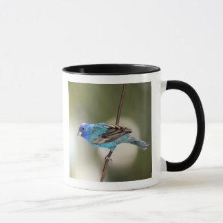 Indigo Bunting perched on bare branch Mug