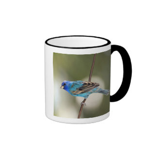 Indigo Bunting perched on bare branch Mugs