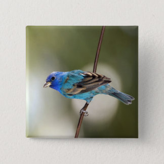 Indigo Bunting perched on bare branch Pinback Button