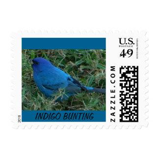 Indigo Bunting Postage Stamp