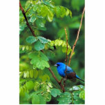"Indigo bunting statuette<br><div class=""desc"">Indigo bunting