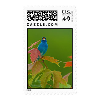 Indigo on Stage Stamps