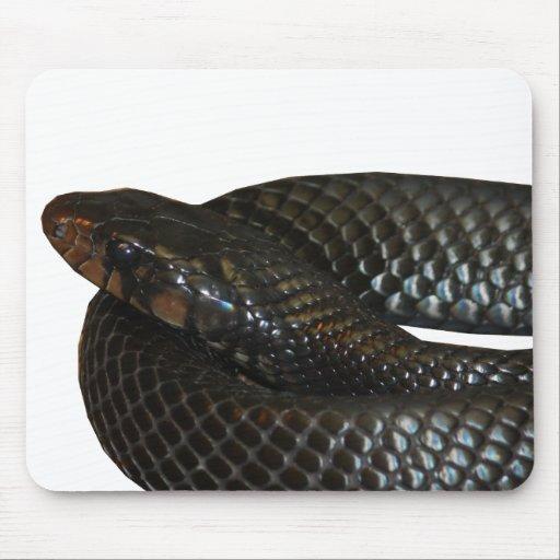 Indigo Snake Mouse Pad
