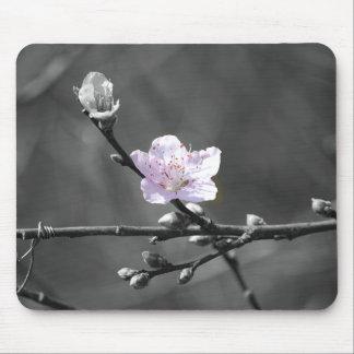 Indirecta de la flor de cerezo rosada tapetes de ratón