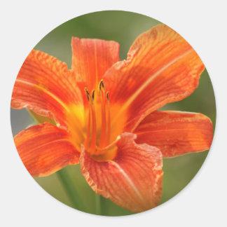 Indirecta del naranja pegatina redonda