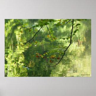 Indirectas del © P Wherrell de las hojas de otoño  Póster