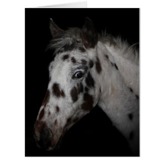 Individuality - Wild Spanish Mustangs Card