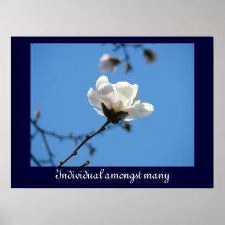 Individuo entre magnolia del blanco de muchas impr posters