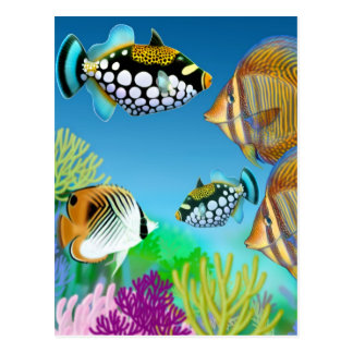 Indo Pacific Reef Fish Postcard