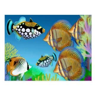 Indo Pacific Reef Fish Postcard