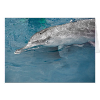 Indo Pacific Wild Dolphin Card
