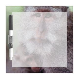 Indonesia, Bali, Ubud, Long-tailed Macaque 1 Dry-Erase Board