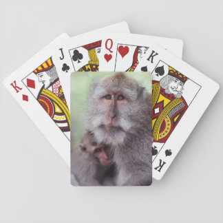 Indonesia, Bali, Ubud, Long-tailed Macaque 1 Playing Cards