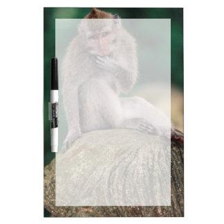 Indonesia, Bali, Ubud, Long-tailed Macaque 2 Dry-Erase Board