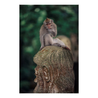Indonesia, Bali, Ubud, Long-tailed Macaque 2 Poster