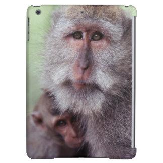 Indonesia, Bali, Ubud, Macaque Largo-atado 1