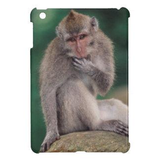 Indonesia, Bali, Ubud, Macaque Largo-atado 2