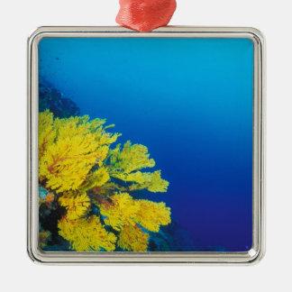 Indonesia, Banda Islands, prolific coral reefs Metal Ornament