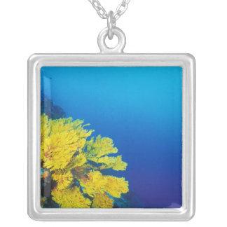Indonesia, Banda Islands, prolific coral reefs Necklaces