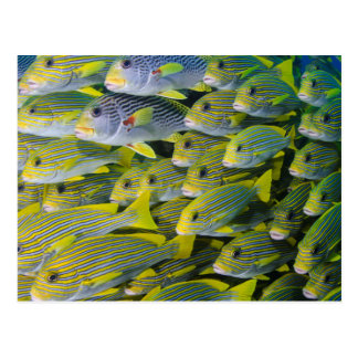 Indonesia. Enseñar pescados Postales