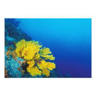 Indonesia, islas de Banda, arrecifes de coral prol Cojinete