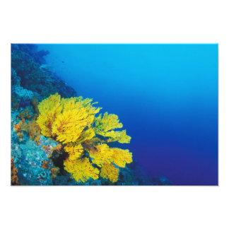 Indonesia, islas de Banda, arrecifes de coral prol Fotografías