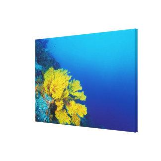 Indonesia, islas de Banda, arrecifes de coral prol Impresiones En Lona Estiradas